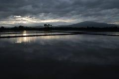 Tiempo de la tarde en el campo del arroz en Tailandia Imagen de archivo libre de regalías
