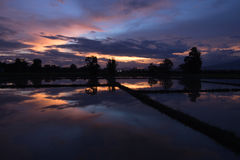Tiempo de la tarde en el campo del arroz en Tailandia Imagenes de archivo
