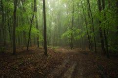 Tiempo de niebla en naturaleza Foto de archivo