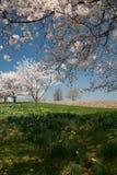 Tiempo de primavera Fotografía de archivo