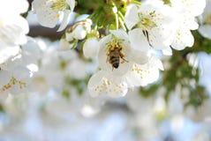 ¡Tiempo de primavera! Imágenes de archivo libres de regalías