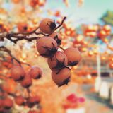 Tiempo de primavera, Berlín, Alemania Fotografía de archivo libre de regalías