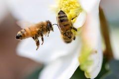 Tiempo de primavera en invierno Imagen de archivo libre de regalías