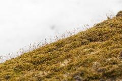 Corteza de las cubiertas del musgo de un árbol muerto en la primavera, Shenandoah P nacional Fotografía de archivo libre de regalías