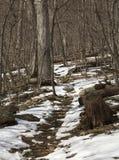 Cubiertas de nieve una pista de senderismo en el parque nacional de Shenandoah, Virginia Foto de archivo