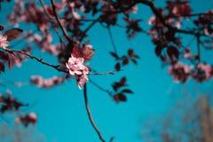 Tiempo de primavera feliz Fotografía de archivo libre de regalías