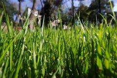 Tiempo de primavera para Estambul abril de 2019, campo, brillante herbosos y Sunny Day foto de archivo libre de regalías