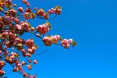 Tiempo de primavera para Estambul abril de 2019, floración del árbol Opinión azul y brillante del cielo imágenes de archivo libres de regalías