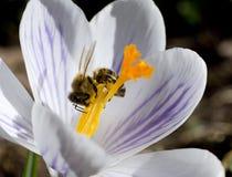 Tiempo de primavera para las abejas Foto de archivo