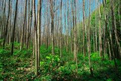Tiempo de primavera para Turqu?a, abril de 2019, bosque de Belgrad, d?a brillante fotos de archivo