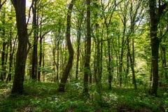 Tiempo de primavera para Turqu?a, abril de 2019, bosque de Belgrad, d?a brillante imagen de archivo libre de regalías