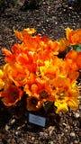 Tiempo de primavera temprano Fotos de archivo