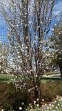 Tiempo de primavera temprano Foto de archivo libre de regalías