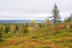 Tiempo de Ruska en Laponia Fotos de archivo