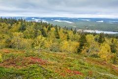 Tiempo de Ruska en Laponia Fotos de archivo libres de regalías