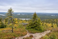 Tiempo de Ruska en Laponia Imagen de archivo libre de regalías