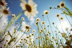 Tiempo de verano Imágenes de archivo libres de regalías
