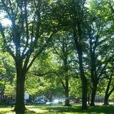 Tiempo de verano del tiempo de verano leemie Foto de archivo