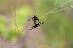 Tiempo del amor del insecto Fotografía de archivo