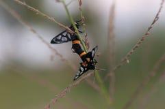 Tiempo del amor del insecto Foto de archivo libre de regalías