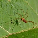 Tiempo del bocado para una araña foto de archivo libre de regalías