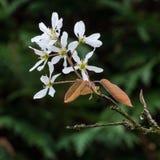 Tiempo del flor Imagen de archivo libre de regalías