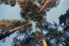 Tiempo del invierno en bosque Imagen de archivo