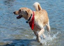 Tiempo del juego del perro en el lago Foto de archivo