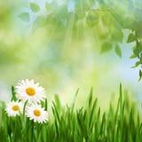 Tiempo del mediodía de la belleza en el prado del verano foto de archivo