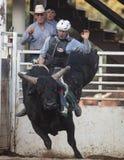 Tiempo del montar a caballo de Bull Imagen de archivo libre de regalías
