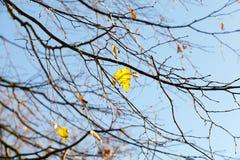 Tiempo del otoño, bosque Imágenes de archivo libres de regalías