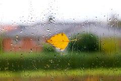 Tiempo del otoño con una hoja del abedul amarillo Imagen de archivo