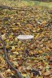 Tiempo del otoño en el bosque Fotografía de archivo
