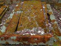 Tiempo del otoño en el cementerio judío abandonado y registrado viejo Imagen de archivo