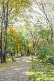 Tiempo del otoño en parque al aire libre con los árboles amarillo-naranja coloreados imagenes de archivo