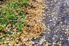 Tiempo del otoño: las hojas caidas amarilleadas del abedul acumularon en el borde de la carretera Fotos de archivo