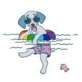 Tiempo del perro de perrito Fotos de archivo libres de regalías