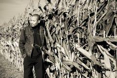 Tiempo en un campo de maíz imágenes de archivo libres de regalías