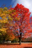 Tiempo escénico del otoño Foto de archivo libre de regalías