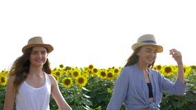 Tiempo feliz, las muchachas hermosas caminan en campo amarillo del girasol en sombreros al aire libre durante la cosecha almacen de video