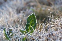 Tiempo frío en la ubicación de Tailandia Fotos de archivo
