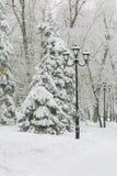Tiempo, frío, invierno en la ciudad Las ramas de árbol cubrieron con nieve y escarcha blancas frescas después de nevadas en el pa imagen de archivo libre de regalías