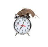 Tiempo lento Foto de archivo