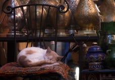 Tiempo medio dormido en el souk Fotografía de archivo libre de regalías