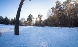 tiempo soleado en bosque Foto de archivo libre de regalías