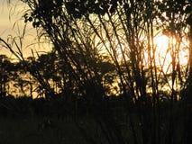 Tiempo tropical en la Florida Imagenes de archivo