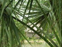 Tiempo tropical en la Florida Imagen de archivo