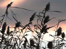 Tiempo ventoso Foto de archivo libre de regalías
