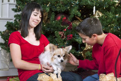Tiempo y animal doméstico de la Navidad Imagenes de archivo