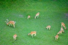 Tien deers Stock Foto's